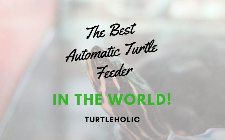 The Best Automatic Turtle Feeder in the World main picture