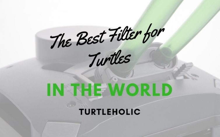 The Best Filter for Turtles in the World main picture