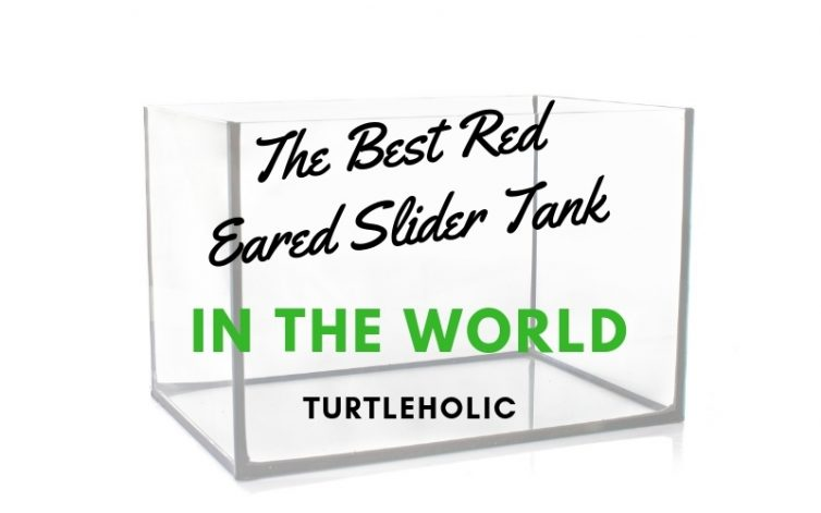 The Best Red Eared Slider Tank in the World main picture