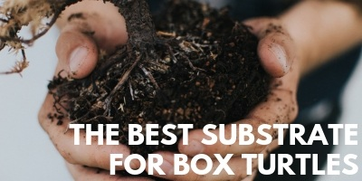 The Best Substrate For Box Turtles link picture
