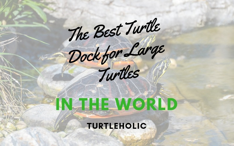 The Best Turtle Dock for Large Turtles in the World main picture