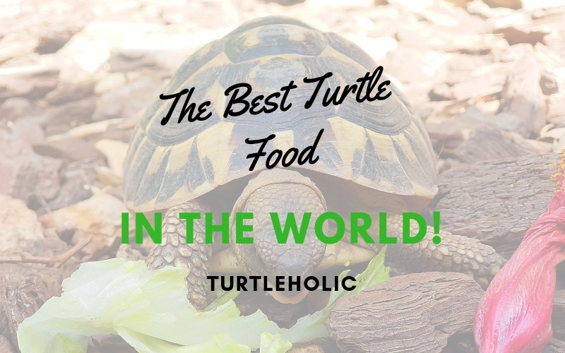 The Best Turtle Food in the World main picture