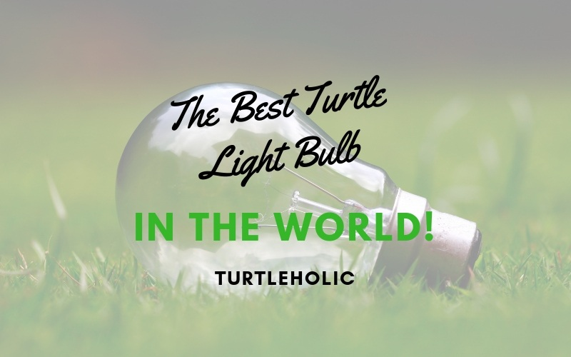 The Best Turtle Light Bulb in the World main picture