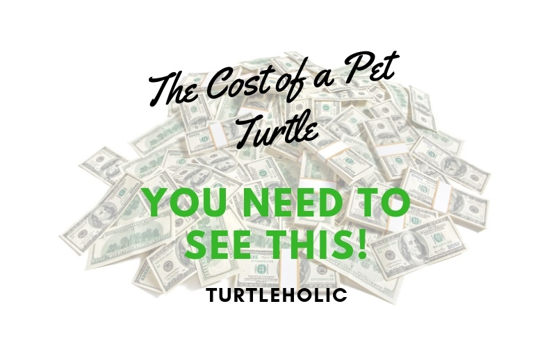 how much does a pet turtle cost