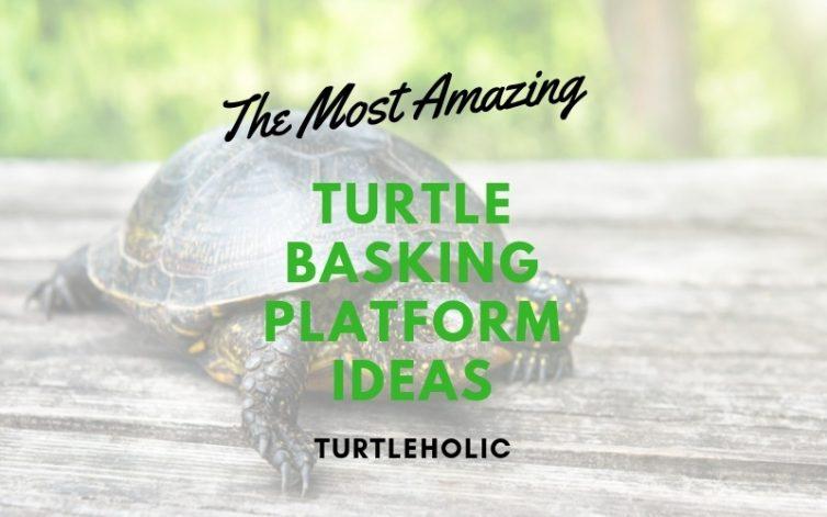The Most Amazing Turtle Basking Platform Ideas Turtleholic