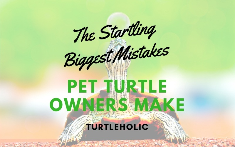 The Startling Biggest Mistakes Pet Turtle Owners Make