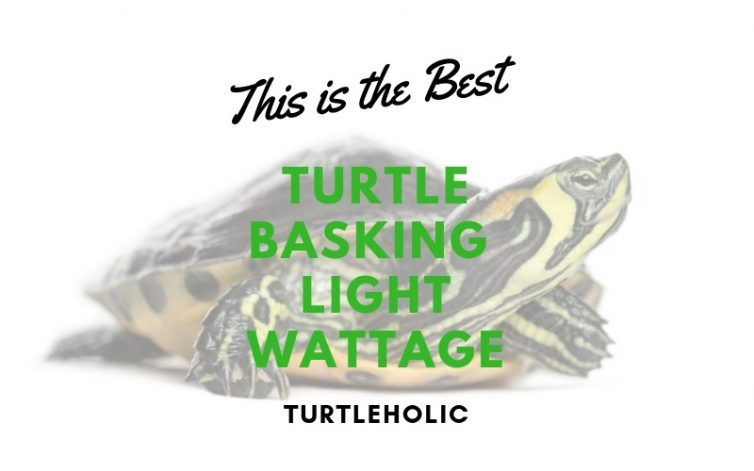 This is the Best Turtle Basking Light Wattage main picture