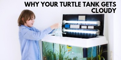 This is the Reason Your Turtle Tank Gets Cloudy link picture