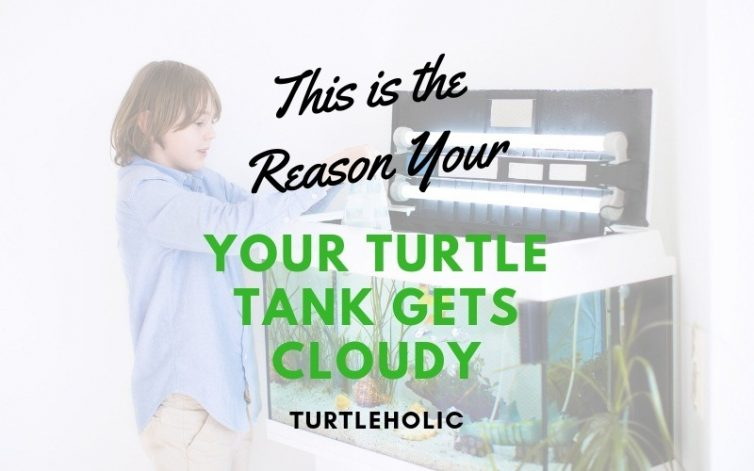 This is the Reason Your Turtle Tank Gets Cloudy