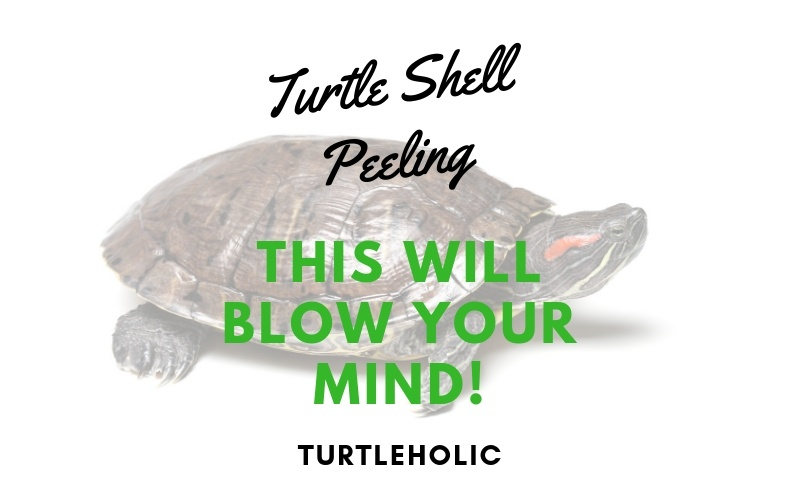 Turtle Shell Peeling - This Will Blow Your Mind! - TurtleHolic