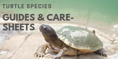 Turtles Species Guides