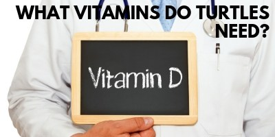 What Vitamins Do Turtles Need link picture
