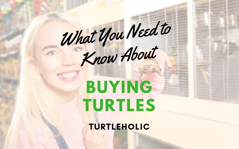 What You Need to Know About Buying Turtles main picture