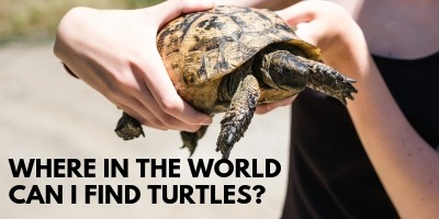 Where in the World Can I Find Turtles link picture