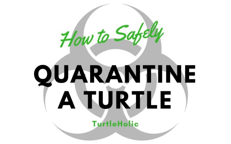How To Safely Quarantine A Turtle main picture