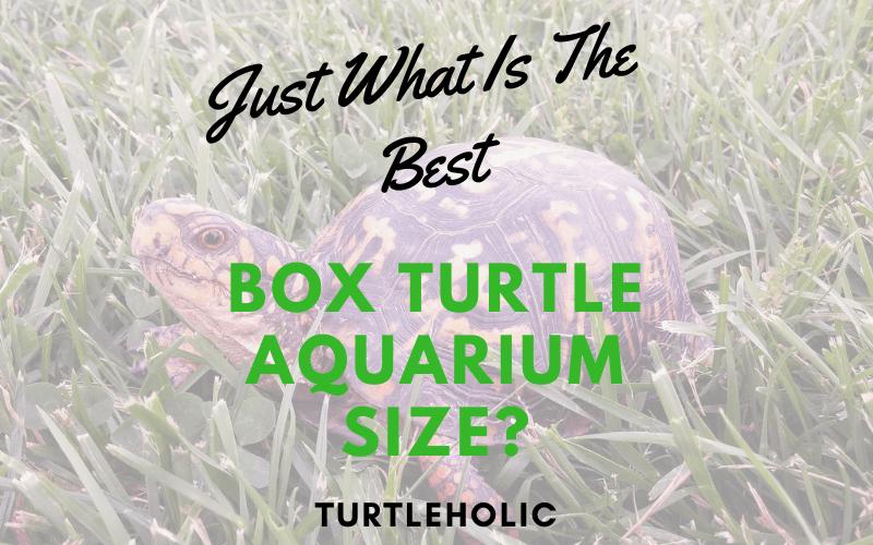 Just What Is The Best Box Turtle Aquarium Size main photo