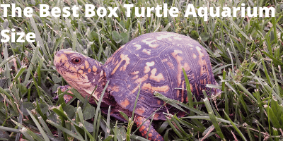 The Best Box Turtle Aquarium Size Link Photo