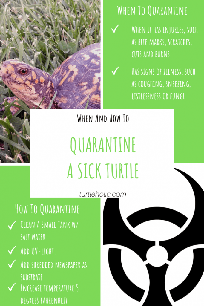 When and How to Quarantine A Sick Turtle