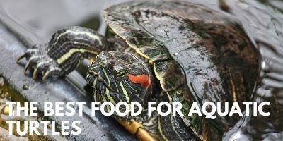 Best Food Aquatic Turtles link picture