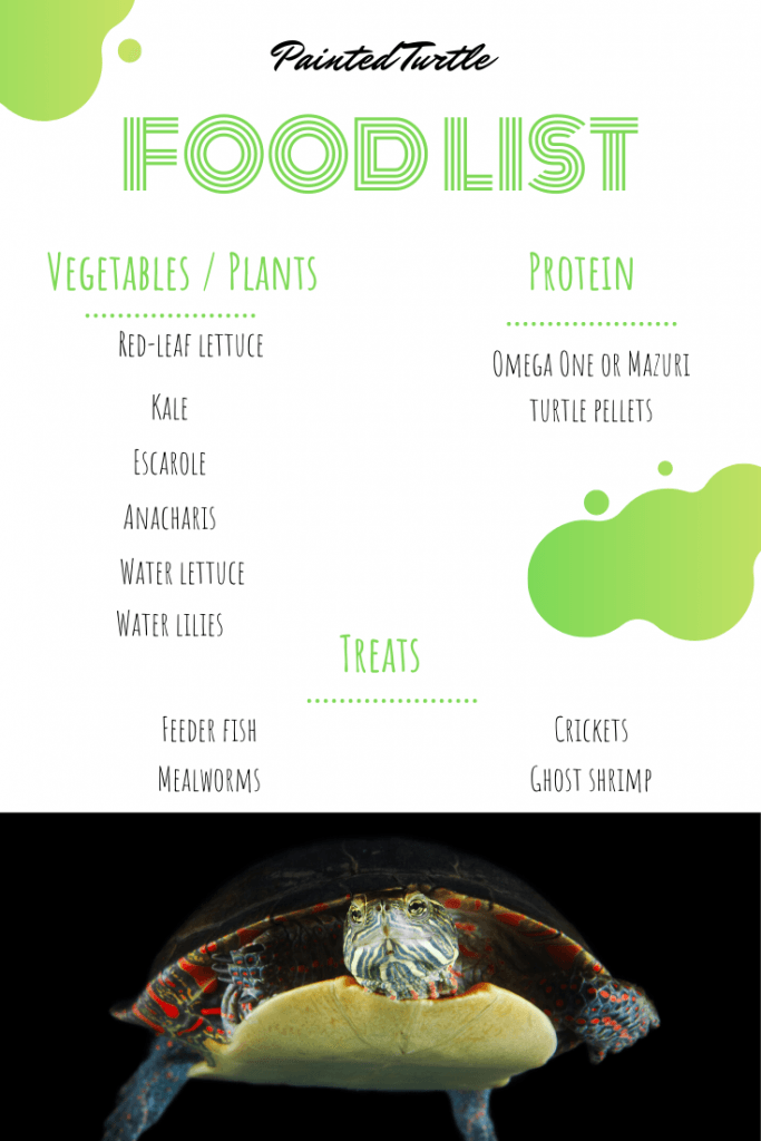 Painted Turtle Food List Pinterest