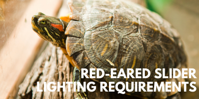 Red-Eared Slider Lighting Requirements link picture