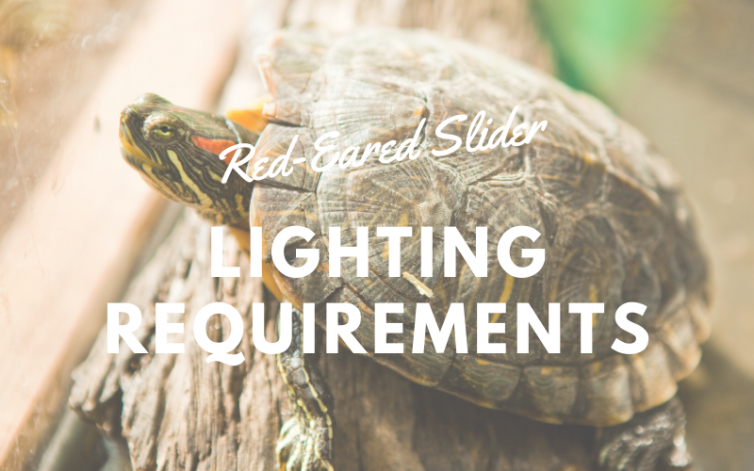 Red-eared Slider Lighting Requirements main pic