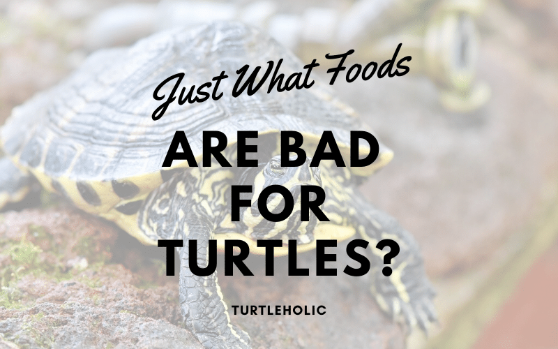 What Foods Bad Turtles main picture