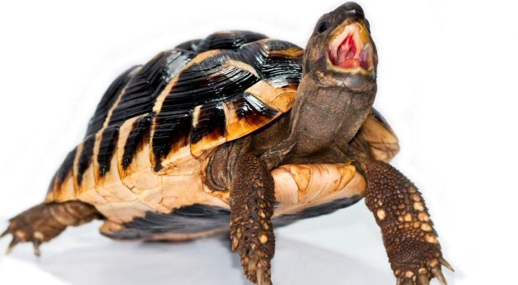 Why Is My Turtle Aggressive featured image