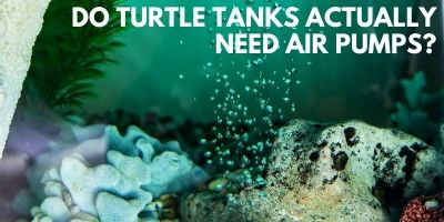 Do Turtle Tanks Actually Need Air Pumps link picture