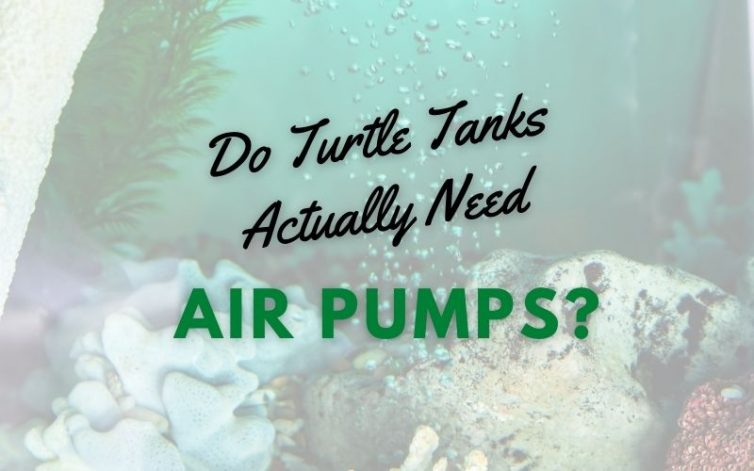 Do Turtle Tanks Actually Need Air Pumps main pic