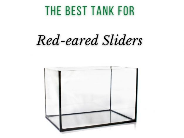 Best Tank for Red-eared Sliders Main Picture