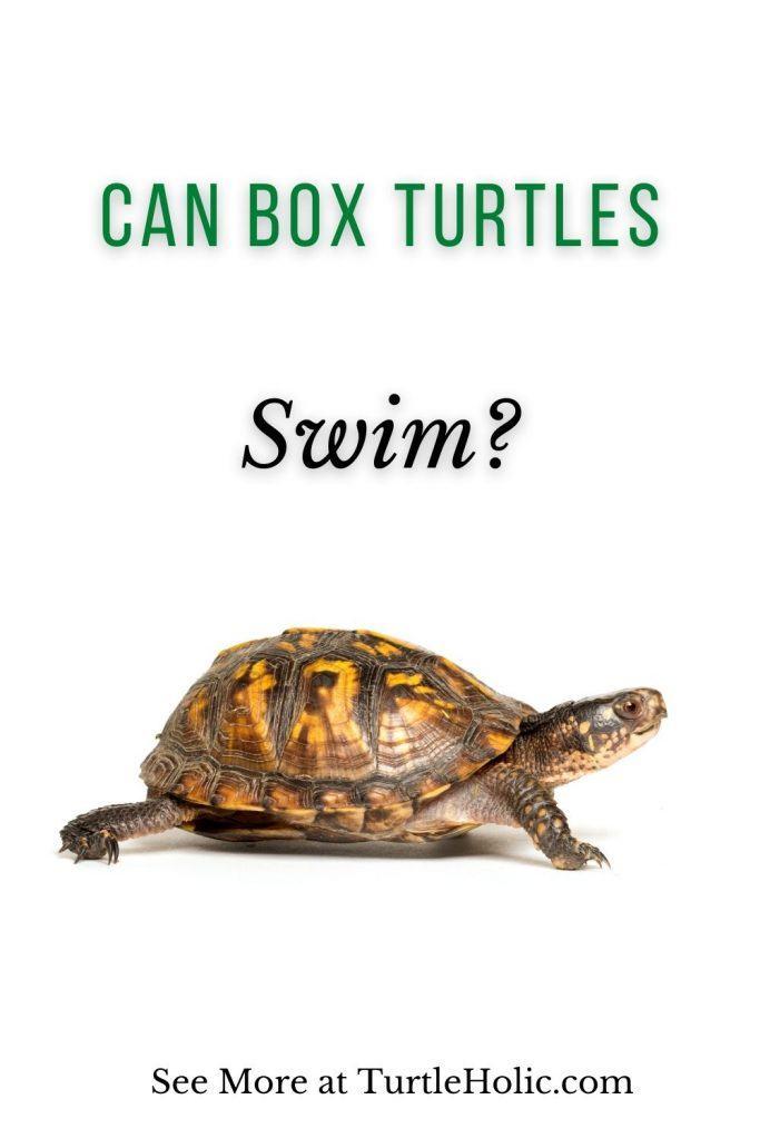 Can Box Turtles Swim Pinterest