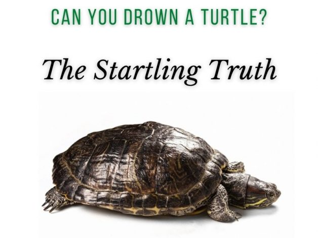 Can You Drown a Turtle Main Picture