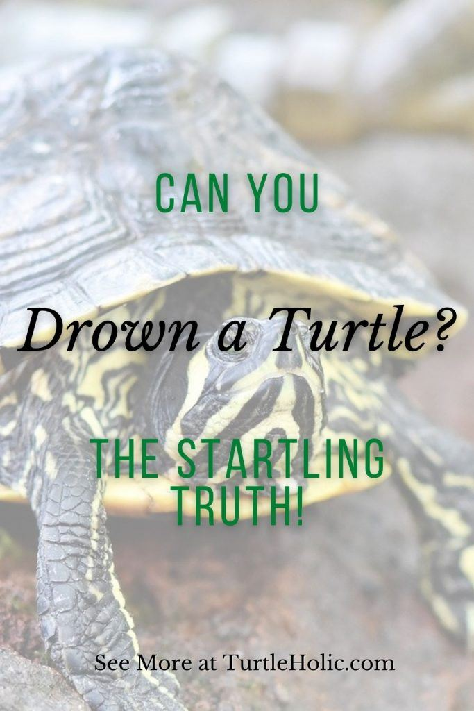 Can You Drown a Turtle Pinterest