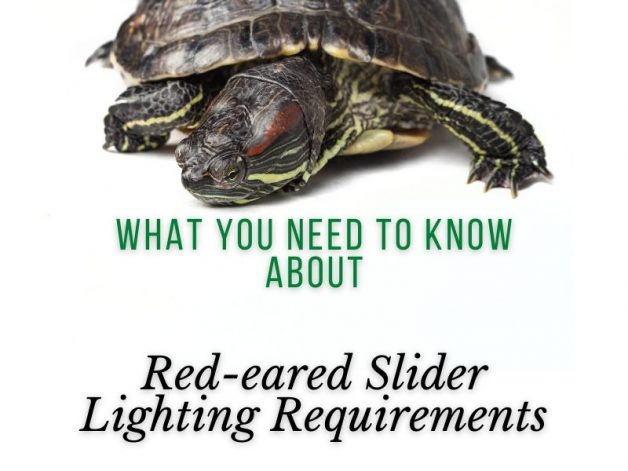 Red-eared Slider Lighting Requirements Main Picture