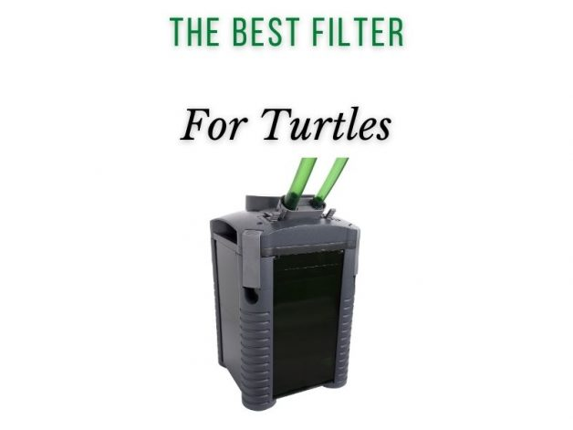 The Best Filter for Turtles Main Picture