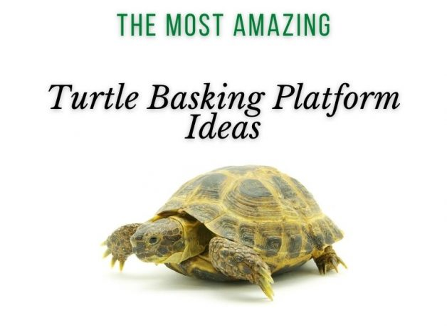 The Most Amazing Turtle Basking Platform Ideas Main Picture