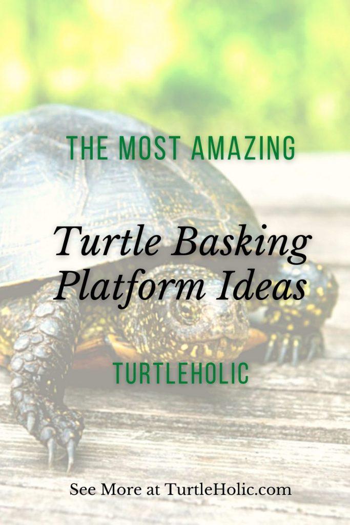 The Most Amazing Turtle Basking Platform Ideas Pinterest