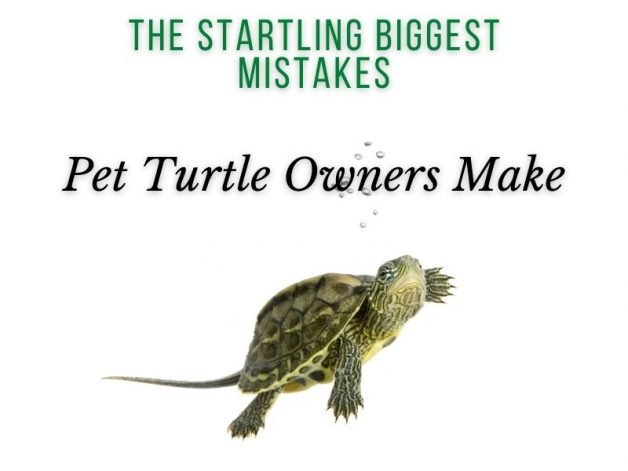 The Startling Biggest Mistakes Pet Turtle Owners Make Turtleholic