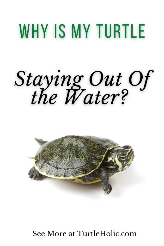 Why Is My Turtle Staying Out Water Pinterest