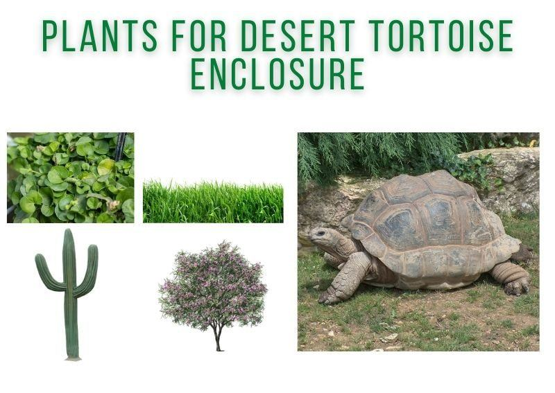 Plants for Desert Tortoise Enclosure