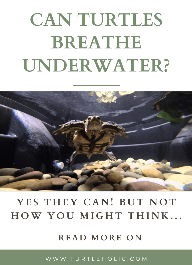 Can Turtles Breathe Underwater?