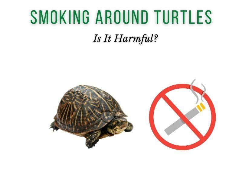 is it harmful to smoke around pet turtles