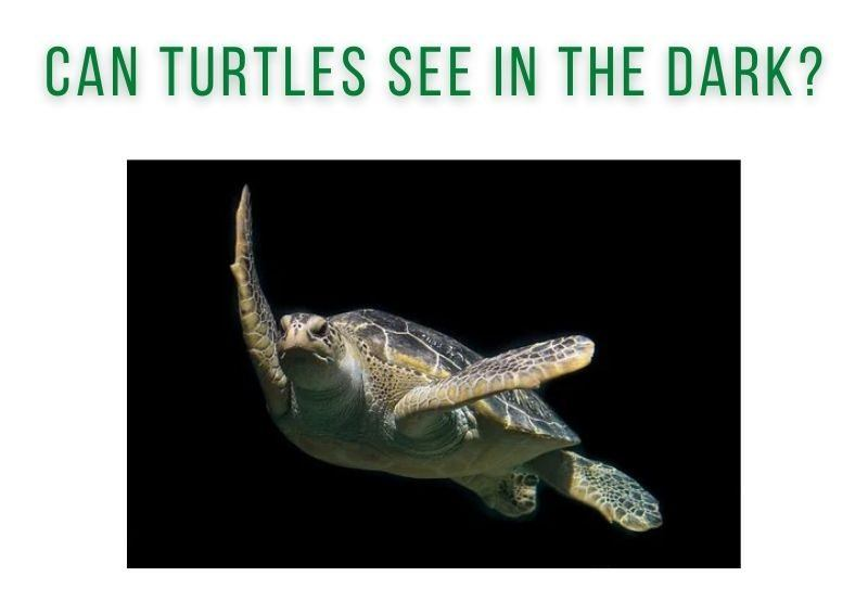 Can Turtles See In The Dark?