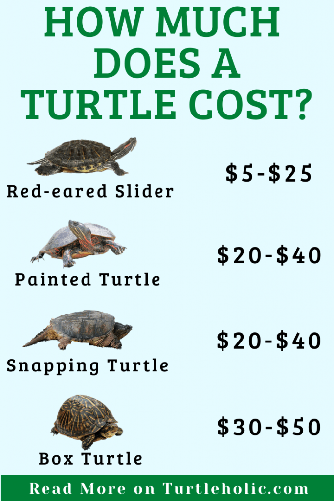 how much does a turtle cost