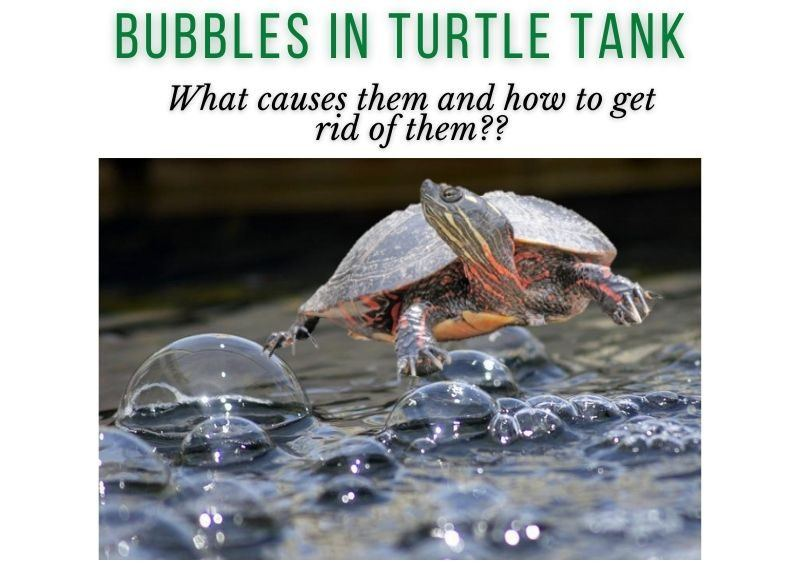 Bubbles in Turtle Tank