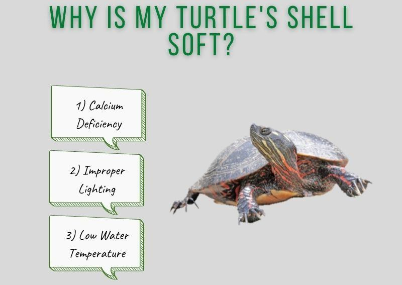 Why Is My Turtle's Shell Soft?