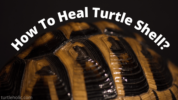 how to heal turtle shell