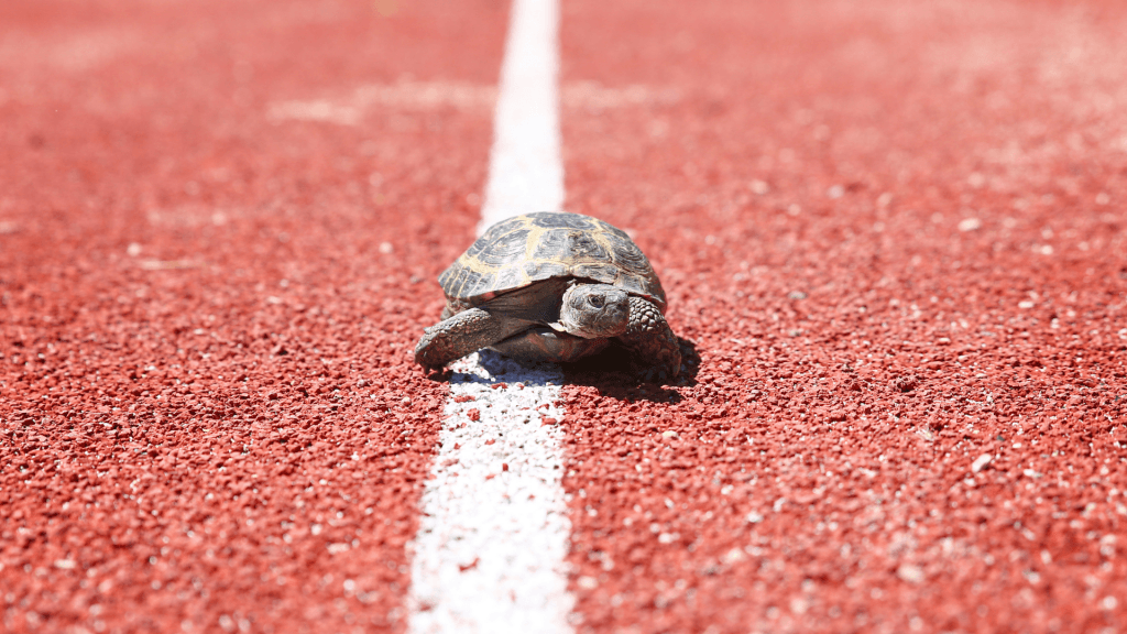 turtle running on a track race