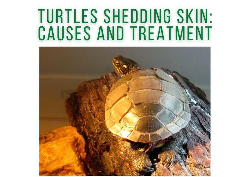 Turtles Shedding Skin